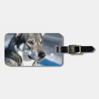 Husky in Snow Luggage Tag