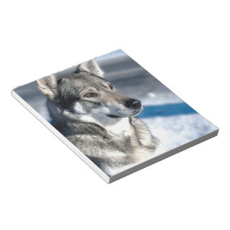Husky in Snow Notepad