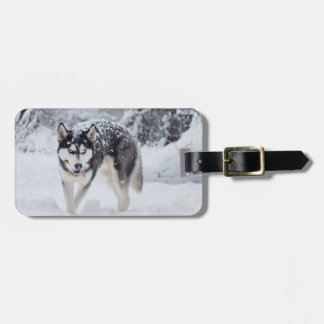 Husky in the snow luggage tag