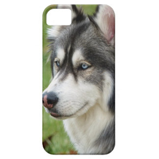 Husky iPhone 5 Cover