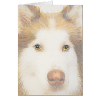 Husky Malamute card, sled dog Card