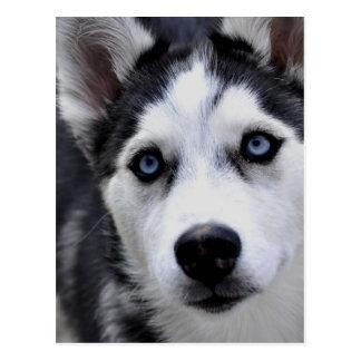 Husky Puppy Postcard