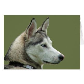 Husky Siberian dog beautiful photo greetings card