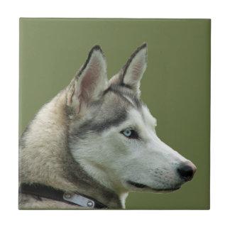 Husky Siberian dog beautiful photo  tile or trivet