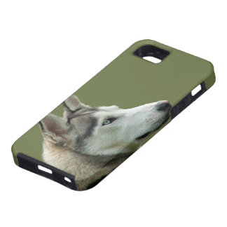 Husky Siberian dog photo iphone 5 case mate, gift