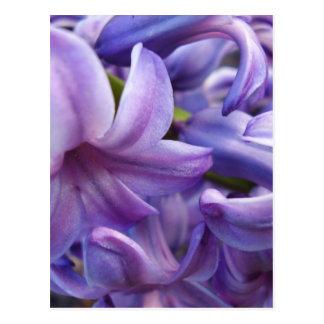 Hyacinth Flowers Postcard
