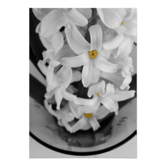 hyacinth in black and white poster