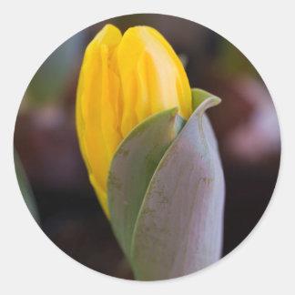 hyacinth in the garden round sticker