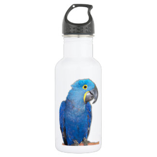 Hyacinth Macaw 532 Ml Water Bottle