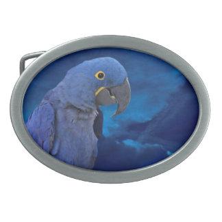 Hyacinth Macaw Belt Buckle