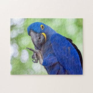 Hyacinth Macaw Bird Jigsaw Puzzle
