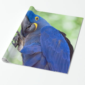 Hyacinth Macaw Bird Wrapping Paper