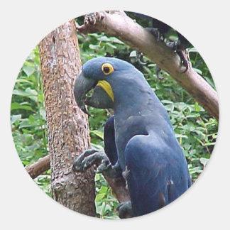 Hyacinth Macaw Classic Round Sticker