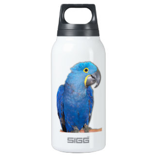 Hyacinth Macaw Insulated Water Bottle