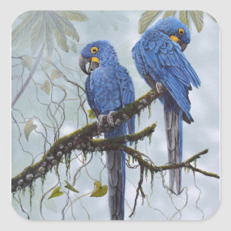 Hyacinth Macaw just for your special gifts Square Sticker