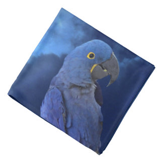 Hyacinth Macaw Kerchief