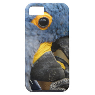Hyacinth Macaw Parrot Case For The iPhone 5