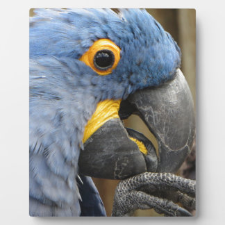 Hyacinth Macaw Parrot Display Plaques