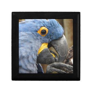 Hyacinth Macaw Parrot Jewelry Box