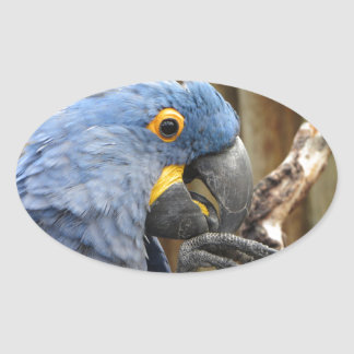Hyacinth Macaw Parrot Oval Sticker