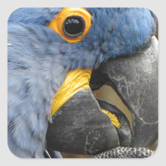 Hyacinth Macaw Parrot Square Sticker