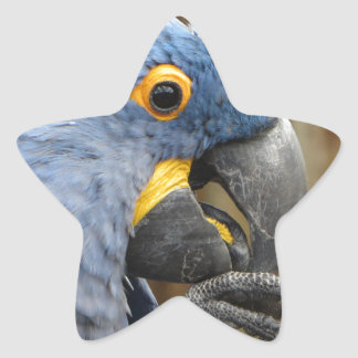 Hyacinth Macaw Parrot Star Sticker