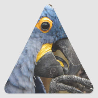 Hyacinth Macaw Parrot Triangle Sticker