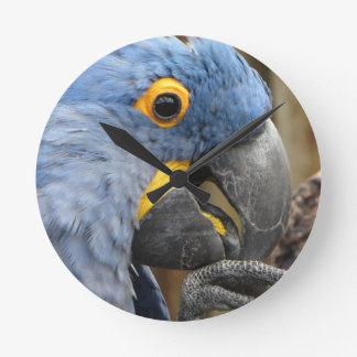 Hyacinth Macaw Parrot Wall Clocks