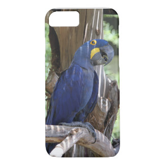 hyacinth macaw phone cover