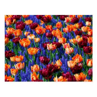 Hyacinth Tulip Garden Cotillion Postcard