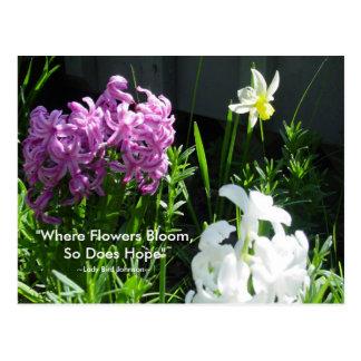Hyacinths & Daffodil Postcard