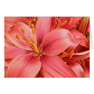 Hybrid Lilies Coordinating Items Card