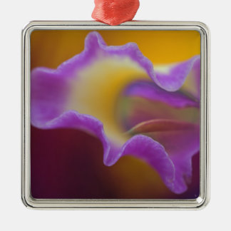 Hybrid orchid, Florida Silver-Colored Square Ornament
