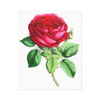 Hybrid Perpetual Rose - Napoleon III Canvas Print