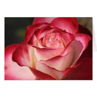 Hybrid Tea Rose Card