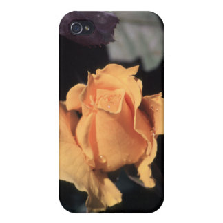 Hybrid Tea Rose Midas Touch iPhone 4 Covers