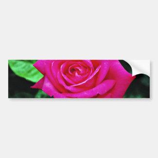 Hybrid Tea Rose 'Miss All-American Beauty' White f Bumper Sticker