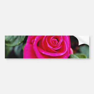 Hybrid Tea Rose 'Miss All-American Beauty' White f Bumper Stickers