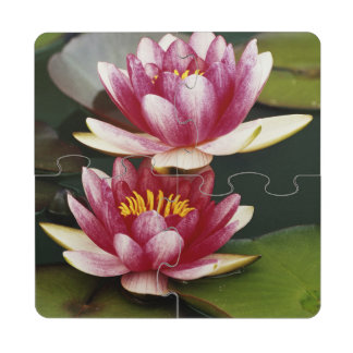 Hybrid water lilies drink coaster puzzle