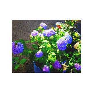 Hydragea purple in pot canvas print