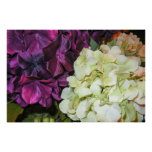 Hydrangea Blooms in Dark Purple & White Poster