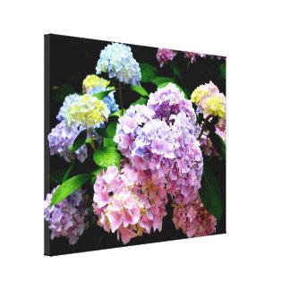 Hydrangea Garden Canvas Print