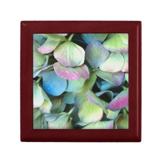 HYDRANGEA  Multi-color petals --- Gift Box