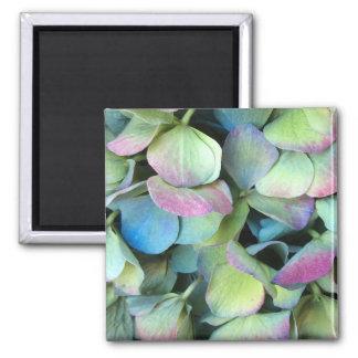 HYDRANGEA  Multi-color petals --- Magnet