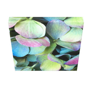 HYDRANGEA  Multi-colour petals --- Canvas Print