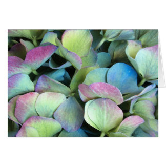 HYDRANGEA  Multi-colour petals --- Card