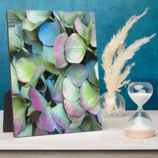 HYDRANGEA  Multi-colour petals --- Photo Plaques