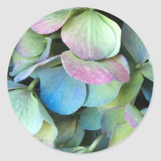 HYDRANGEA  Multi-colour petals --- Round Sticker