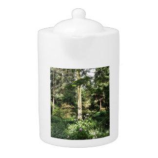 Hydrangea Wood Trees Nature Photography