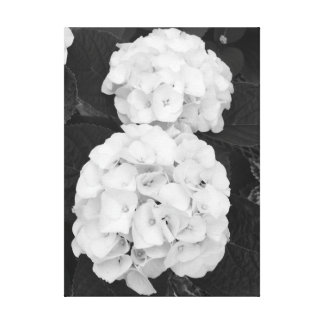 Hydrangeas Black & White Canvas Print
